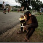 What Disney and Chimpanzee Can Teach us About The Original Human Diet