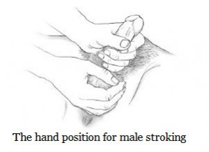 The Hand Position For Stroking the Penis