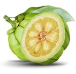 Post image for Garcinia Cambogia (hydroxycitric acid) for Weight Loss – Efficacy and Side Effects